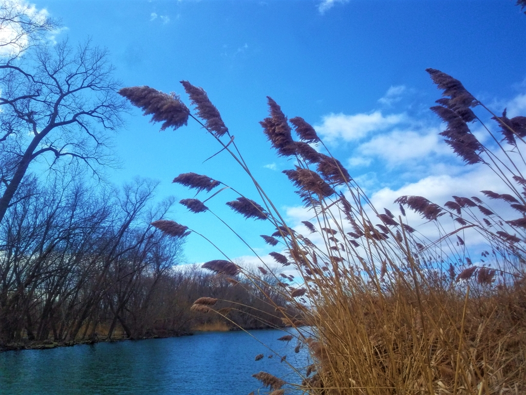 Plants blowing in the breeze next to a river.