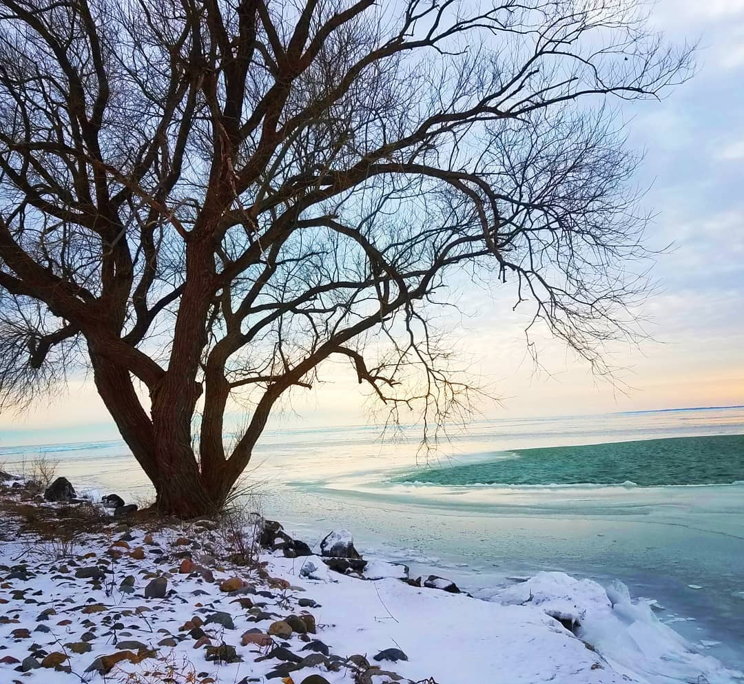 Landscape photo of a lone tree on Lake St.Clair in winter.
