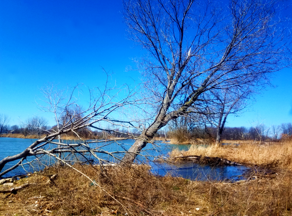 Trees along the shoreline of Lake St.Clair
