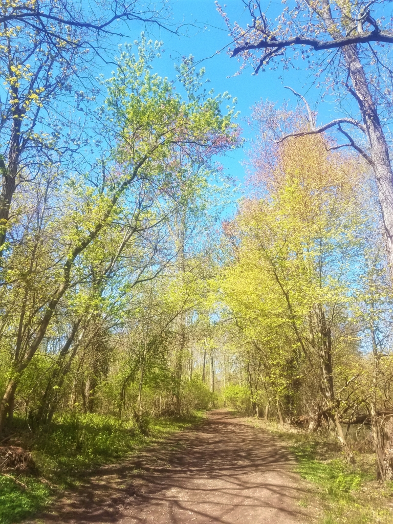 A trail through the leading through the forest on the Don Green Way Nature trail.