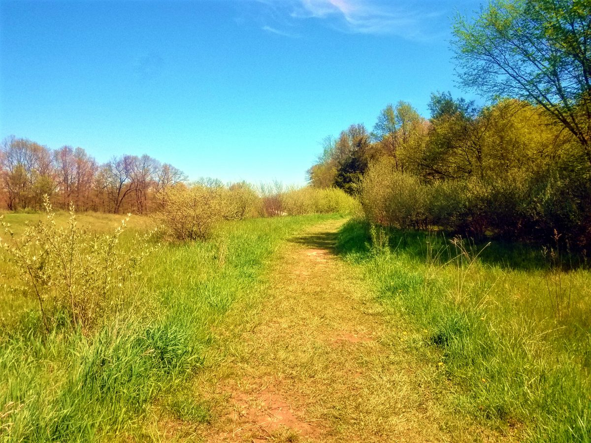 A photo of a field on the Osprey Trail at Stony Creek Metro Park In Washington Michigan