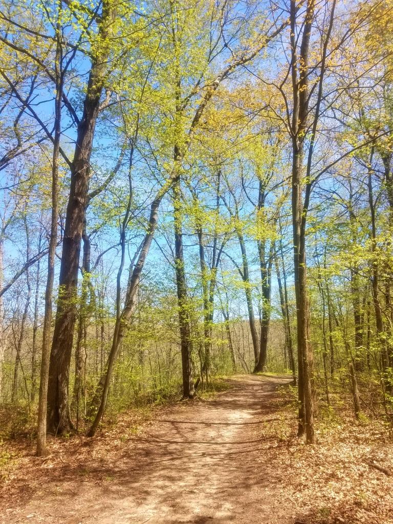 A hiking path on the Osprey Trail.