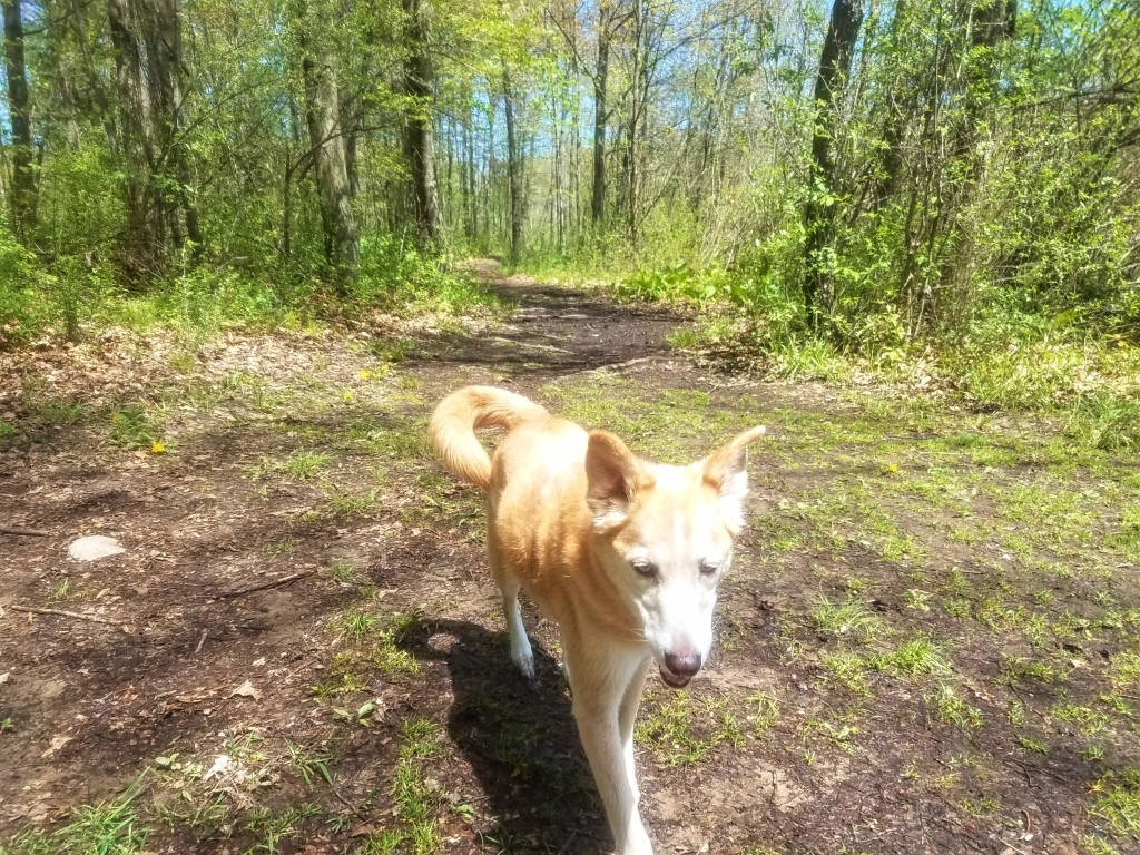 A photo of Ruby the dog on the Osprey Trail.