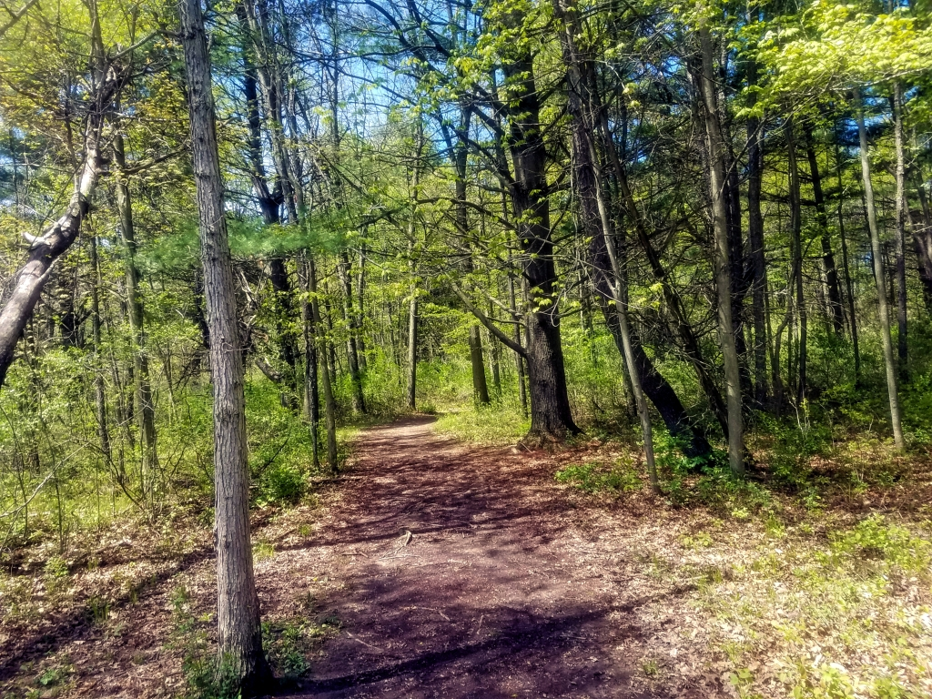 a photo of the Osprey trail leading into the woods.