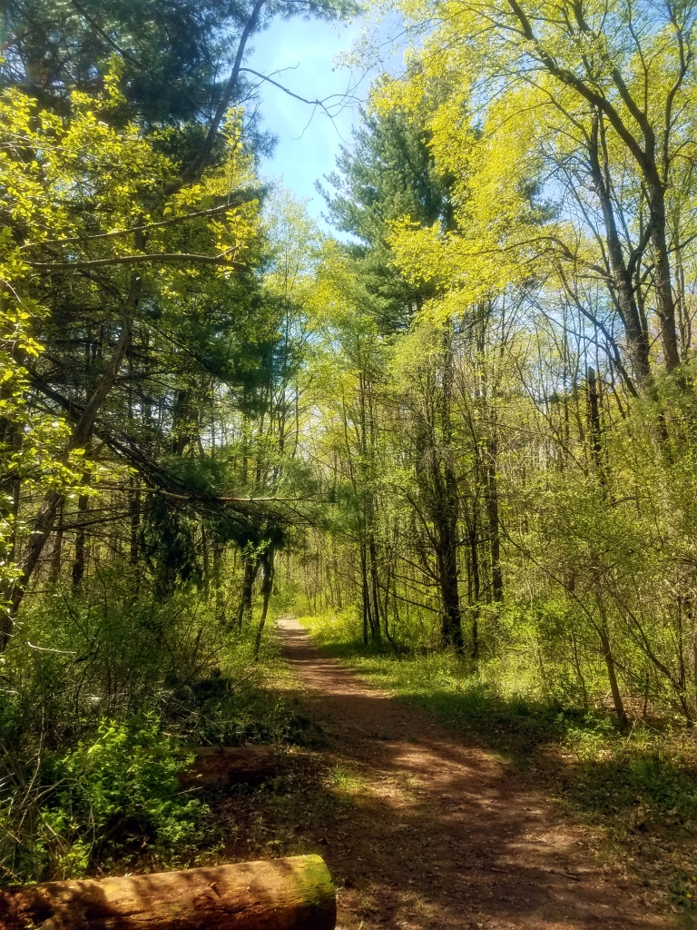 A photo of the forest hiking path on the Osprey Trail.