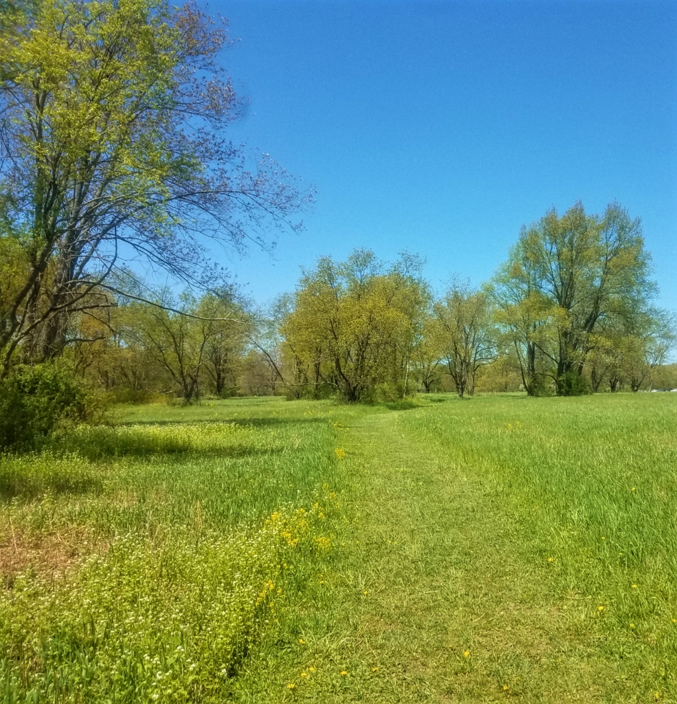 A green grassy field on the Osprey Trail.