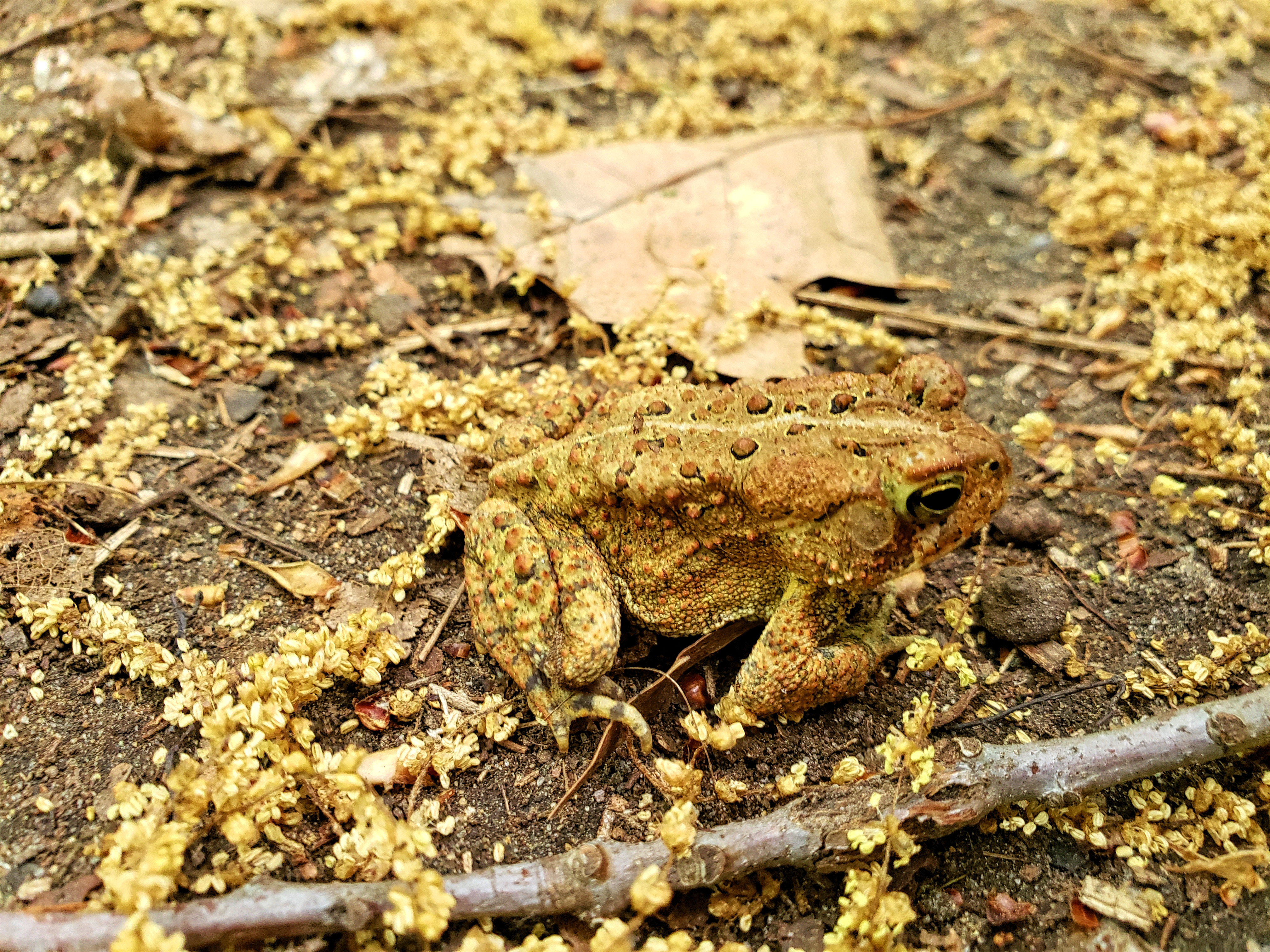 A toad on the forest floor.