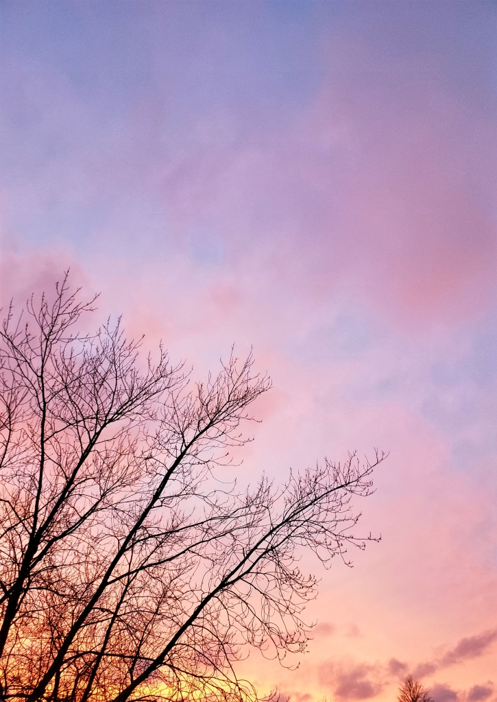 A photograph of tree branches at sunset used as the inspiration for the photo art feature in this post.