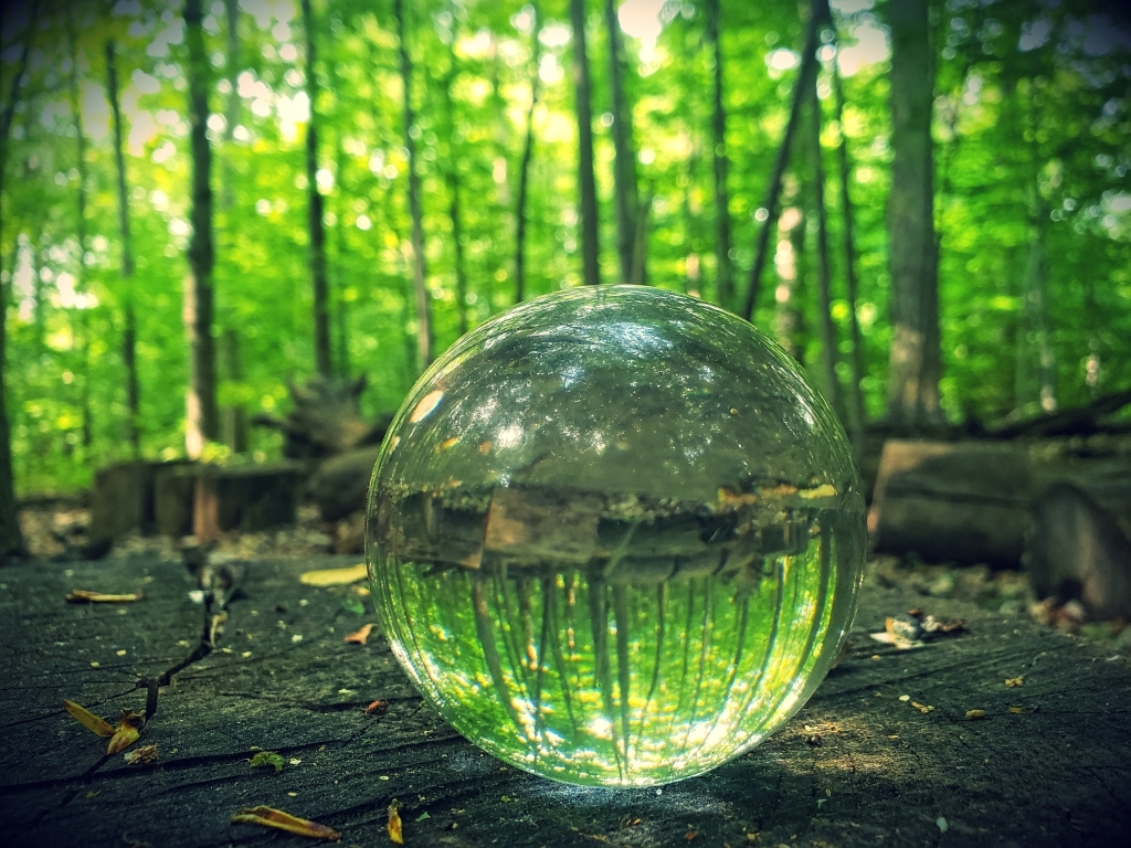 A lens ball captures trees in the forest.