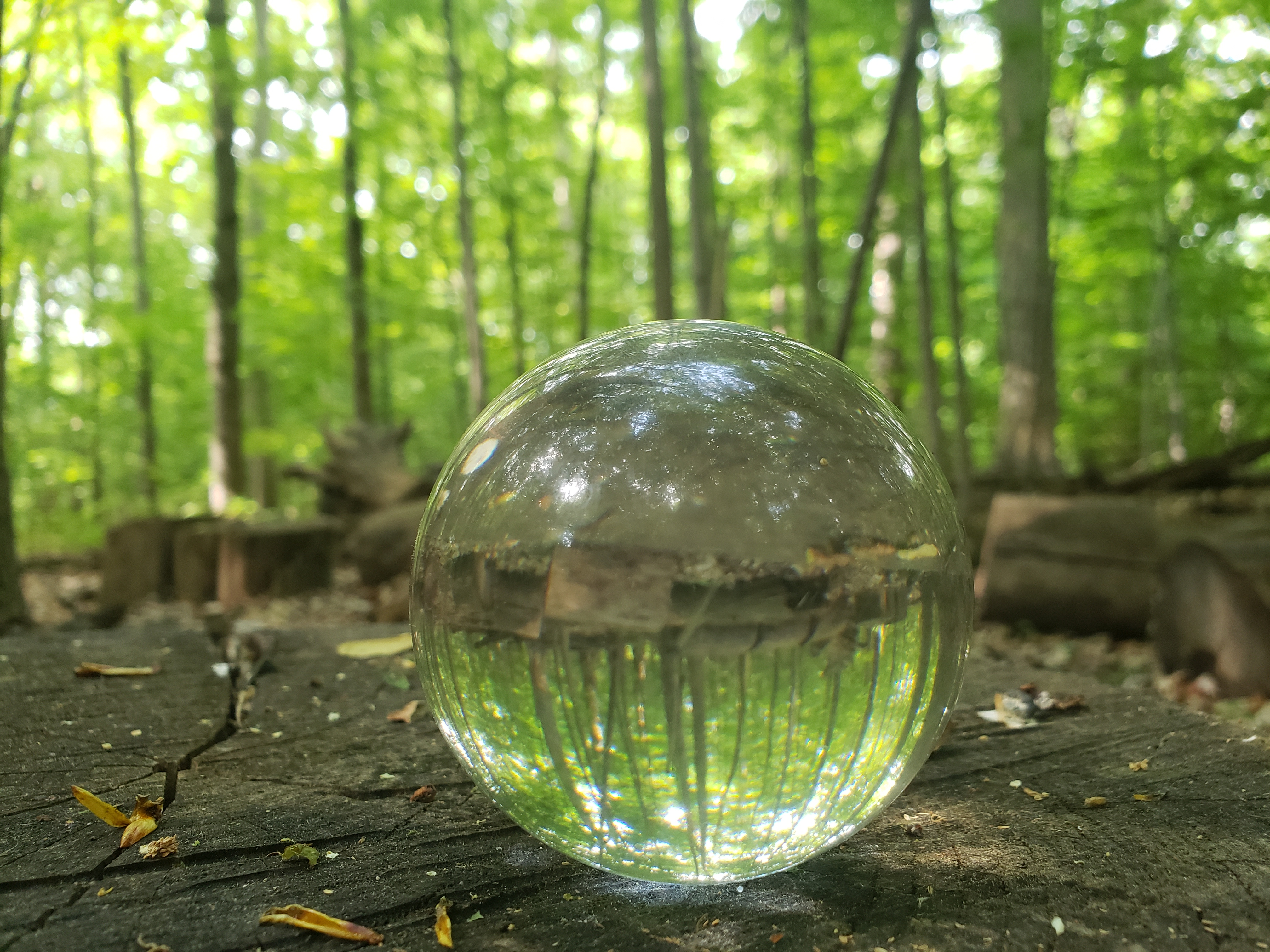 A lens ball capturing tress in a forest