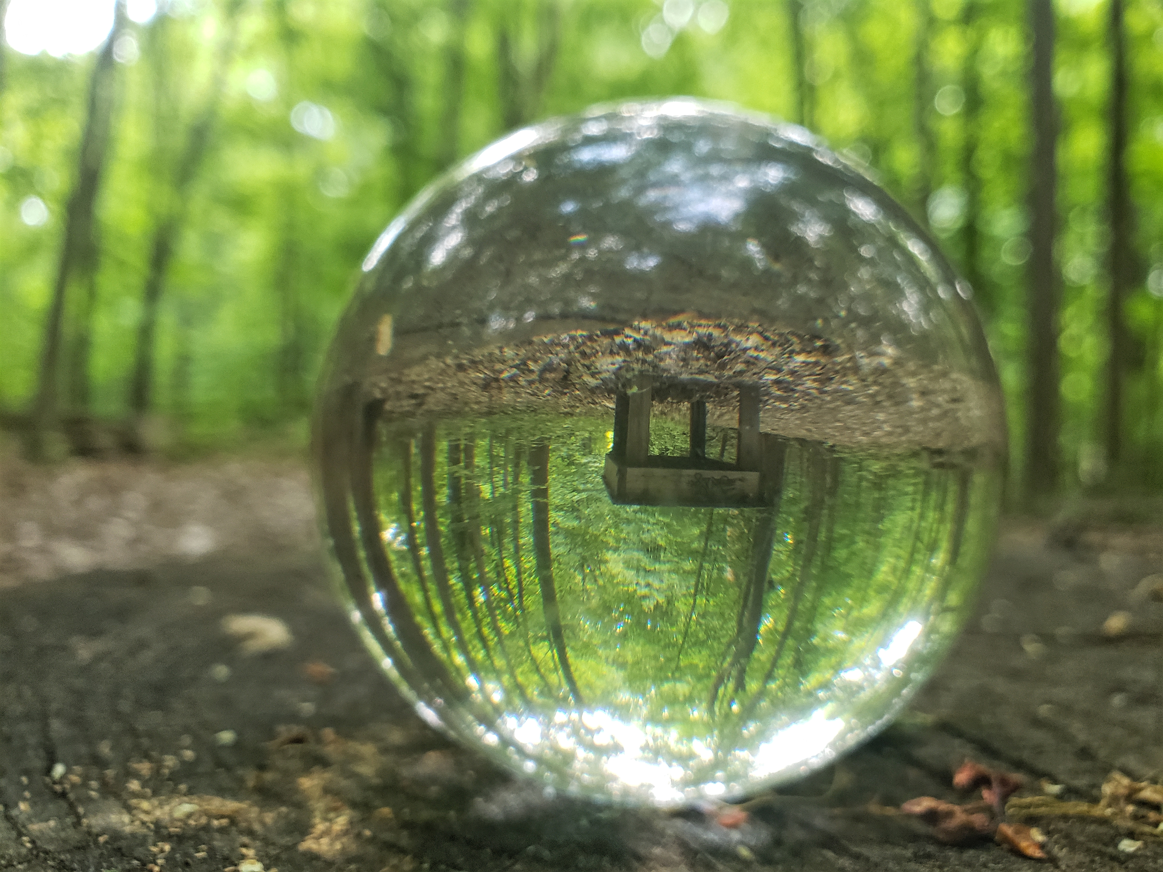 A lens ball that has capture a wood bench in a forest.