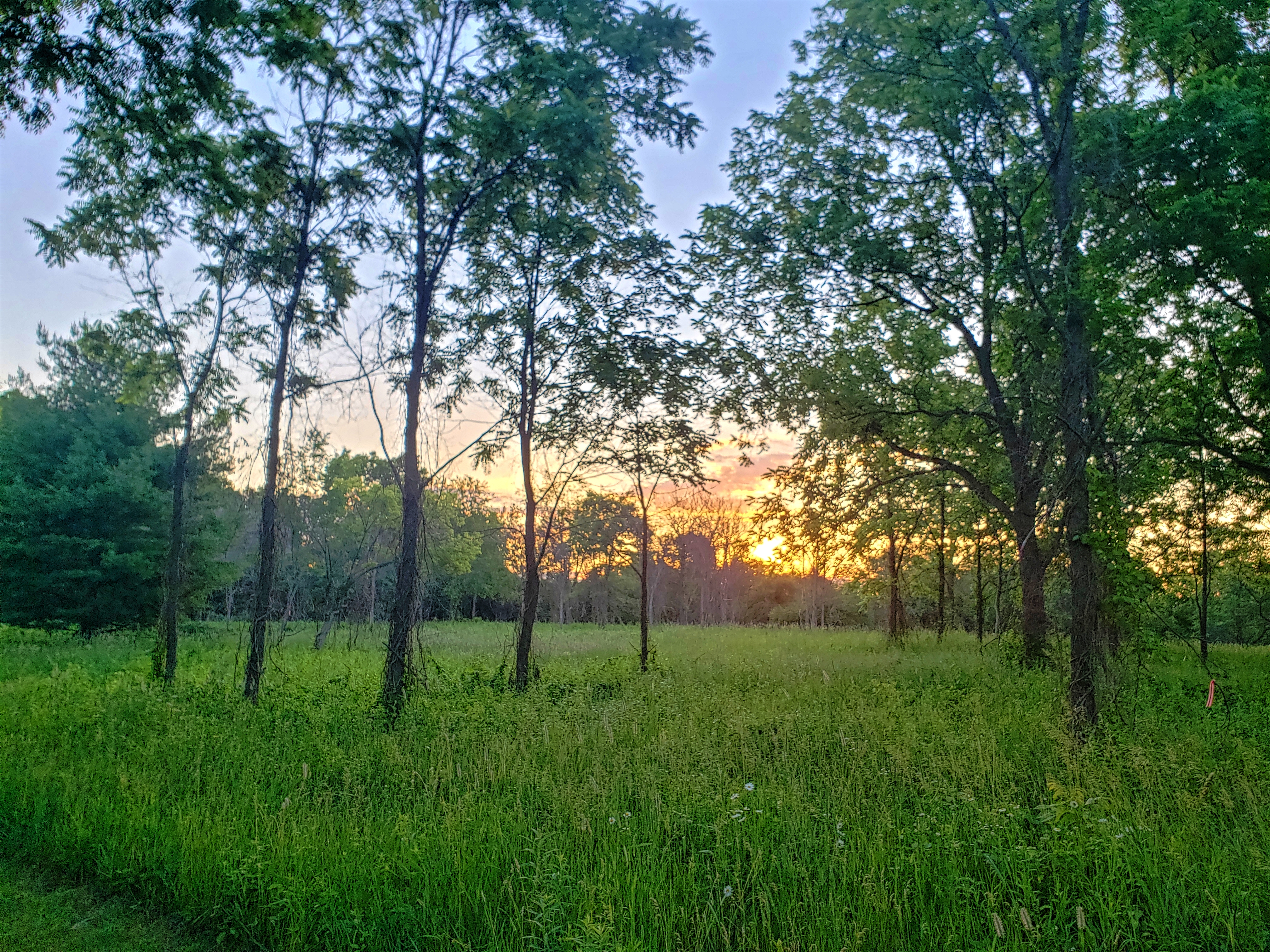 Sun rise in the woods at Draper Twin Lake Park.