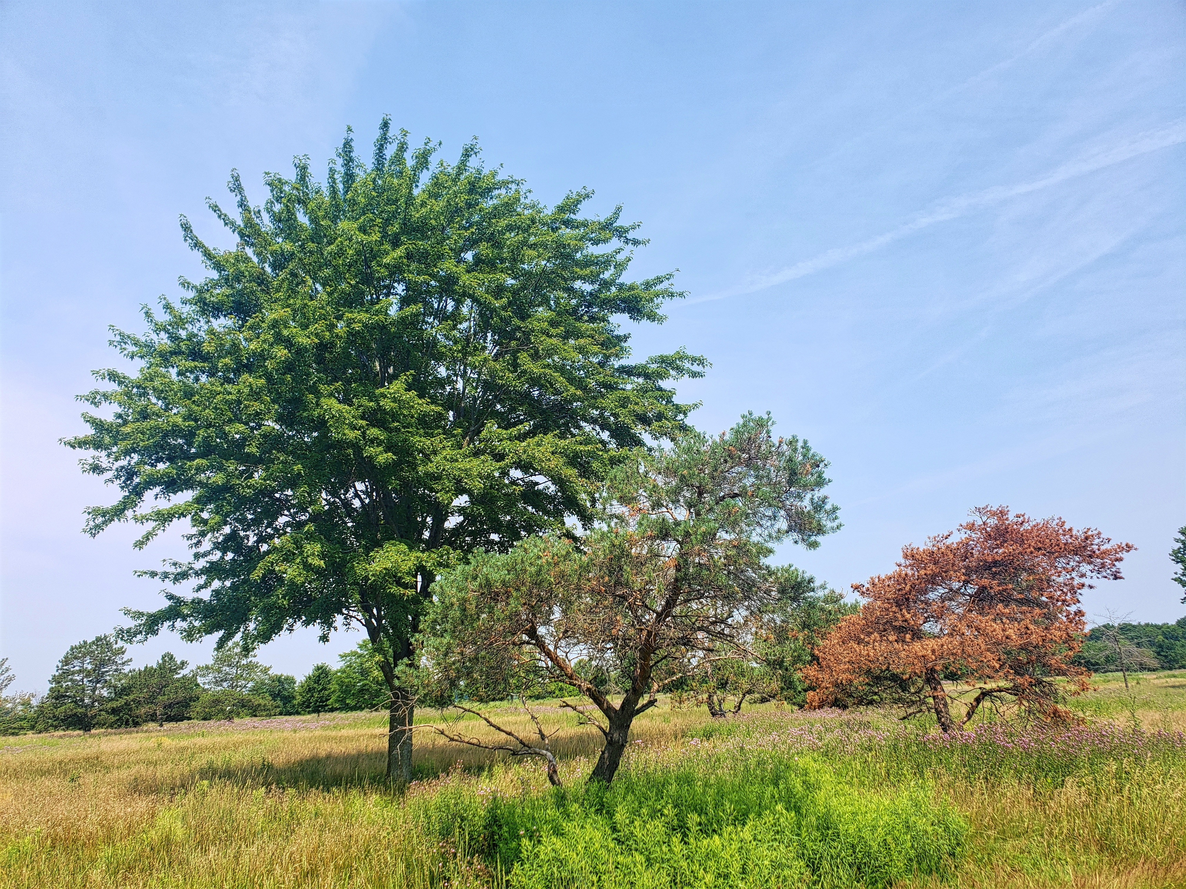 Some of the cool trees to see at Wolcott Mills.