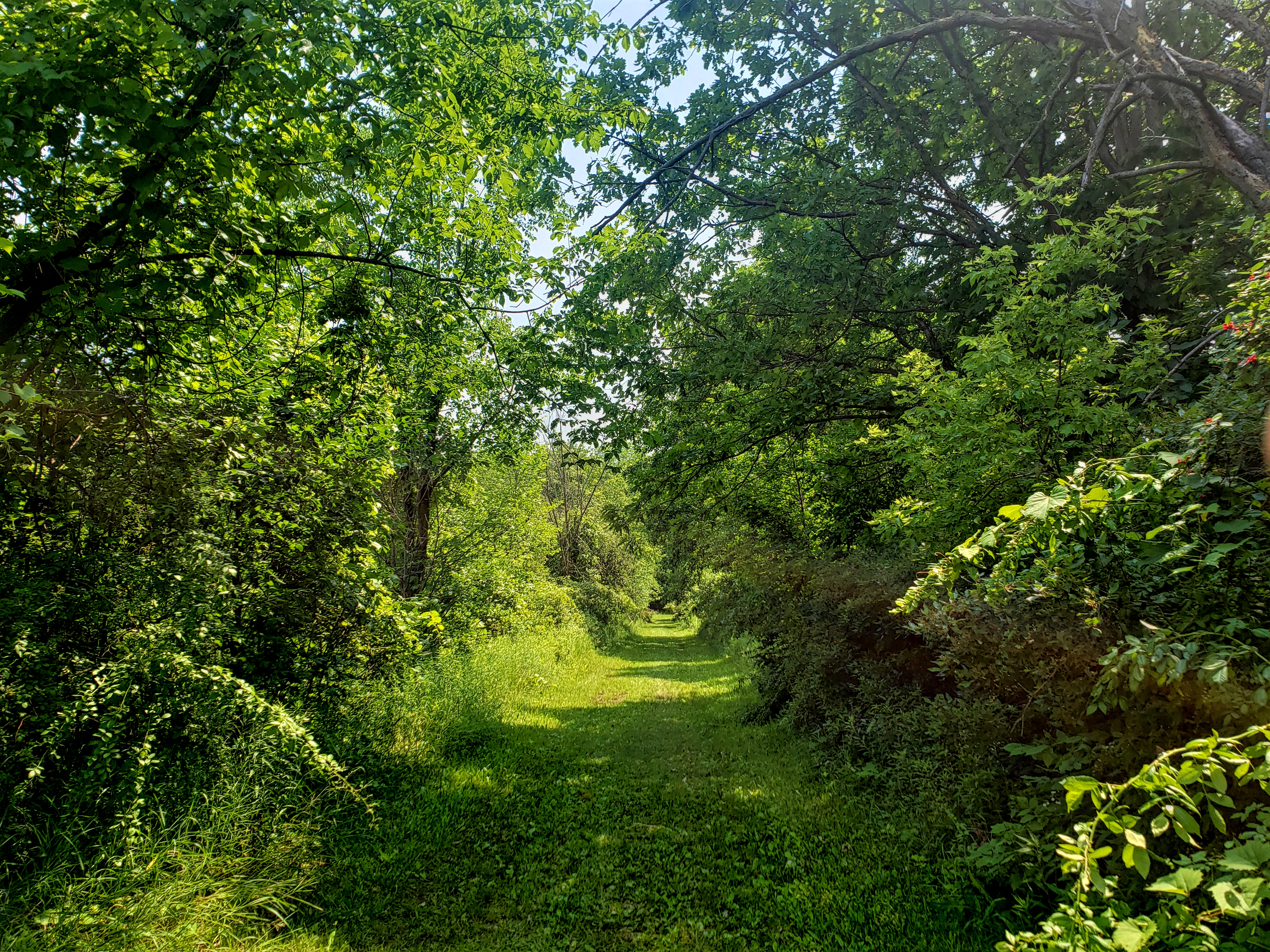 a grassy trail path leads out of a wooded area on the North Branch Trail at Wolcott Mills.