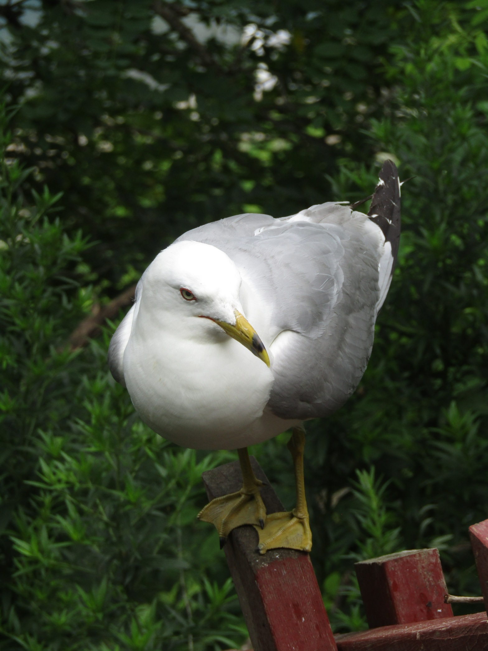 A seagull perching on a wooden post at Niagara Falls State Park in Niagara Falls New York