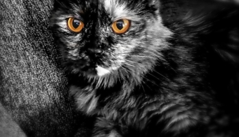 a monochrome photo of a sassy cat.