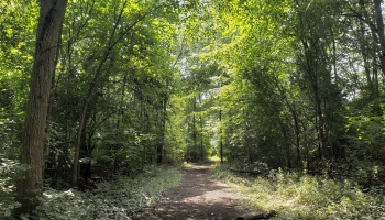 a hiking trail along the don green way nature trail