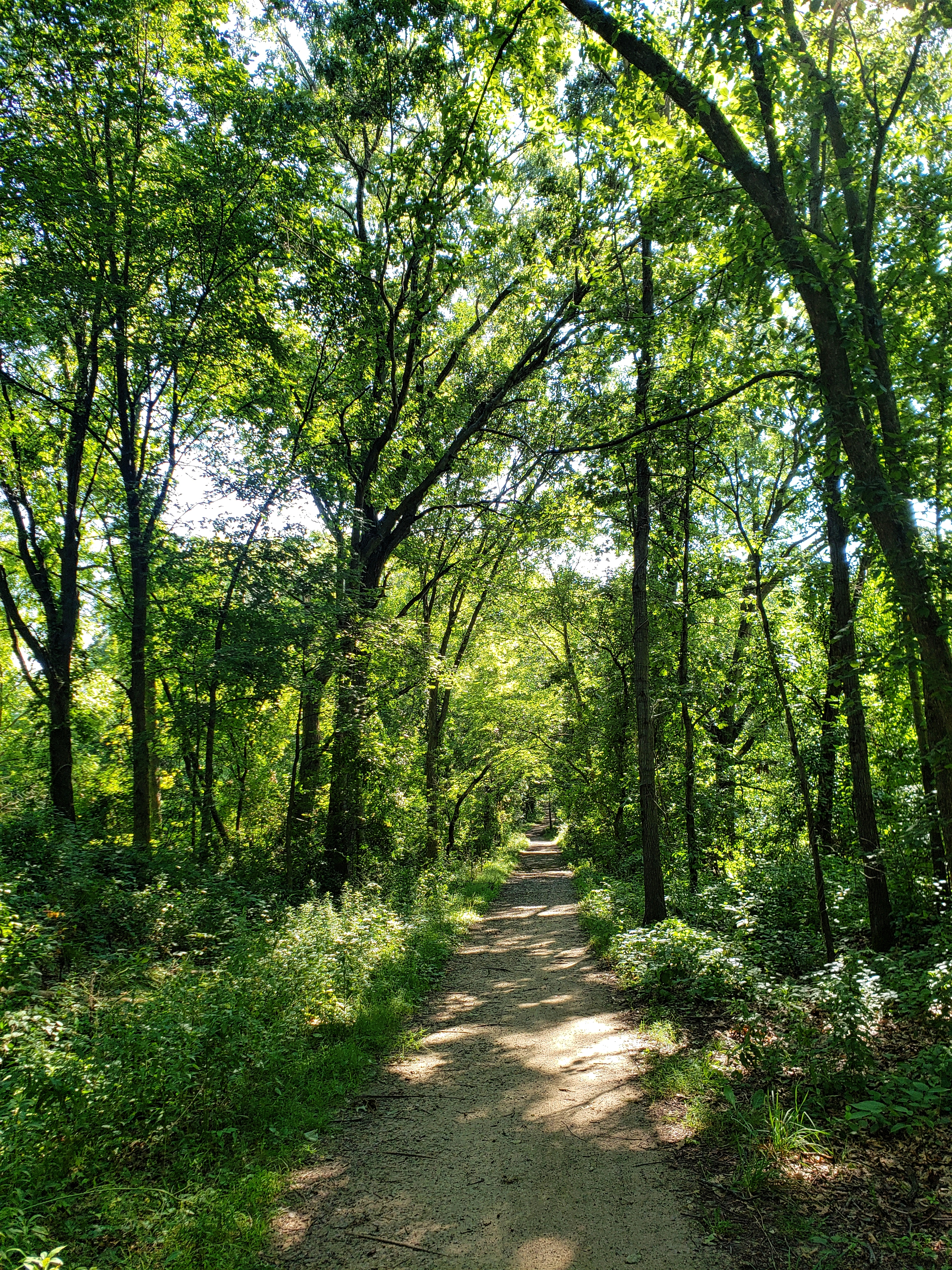 the hiking trail travels through several different wooded areas.