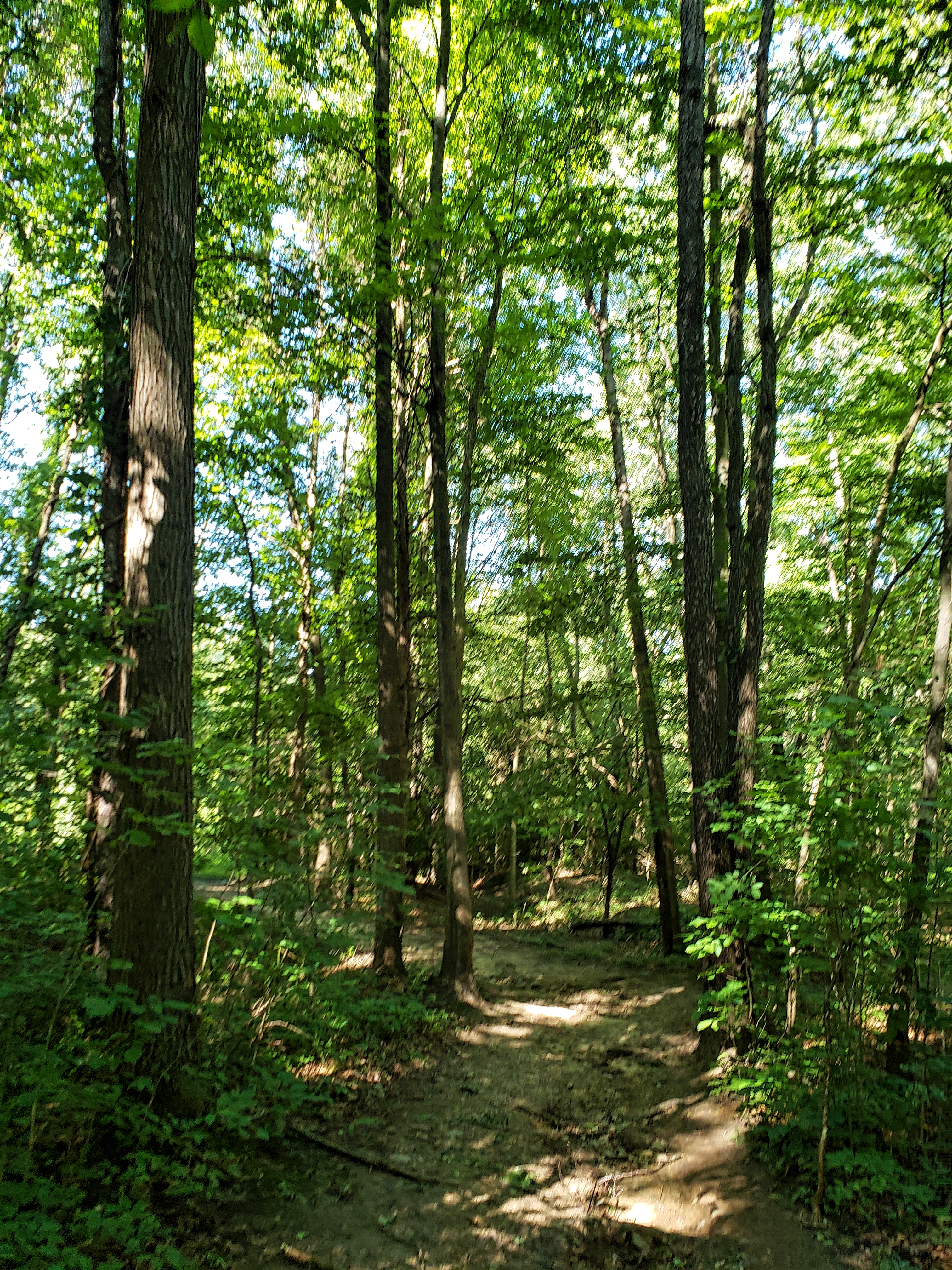wooded area along the trolley trail at stony creek metropark.