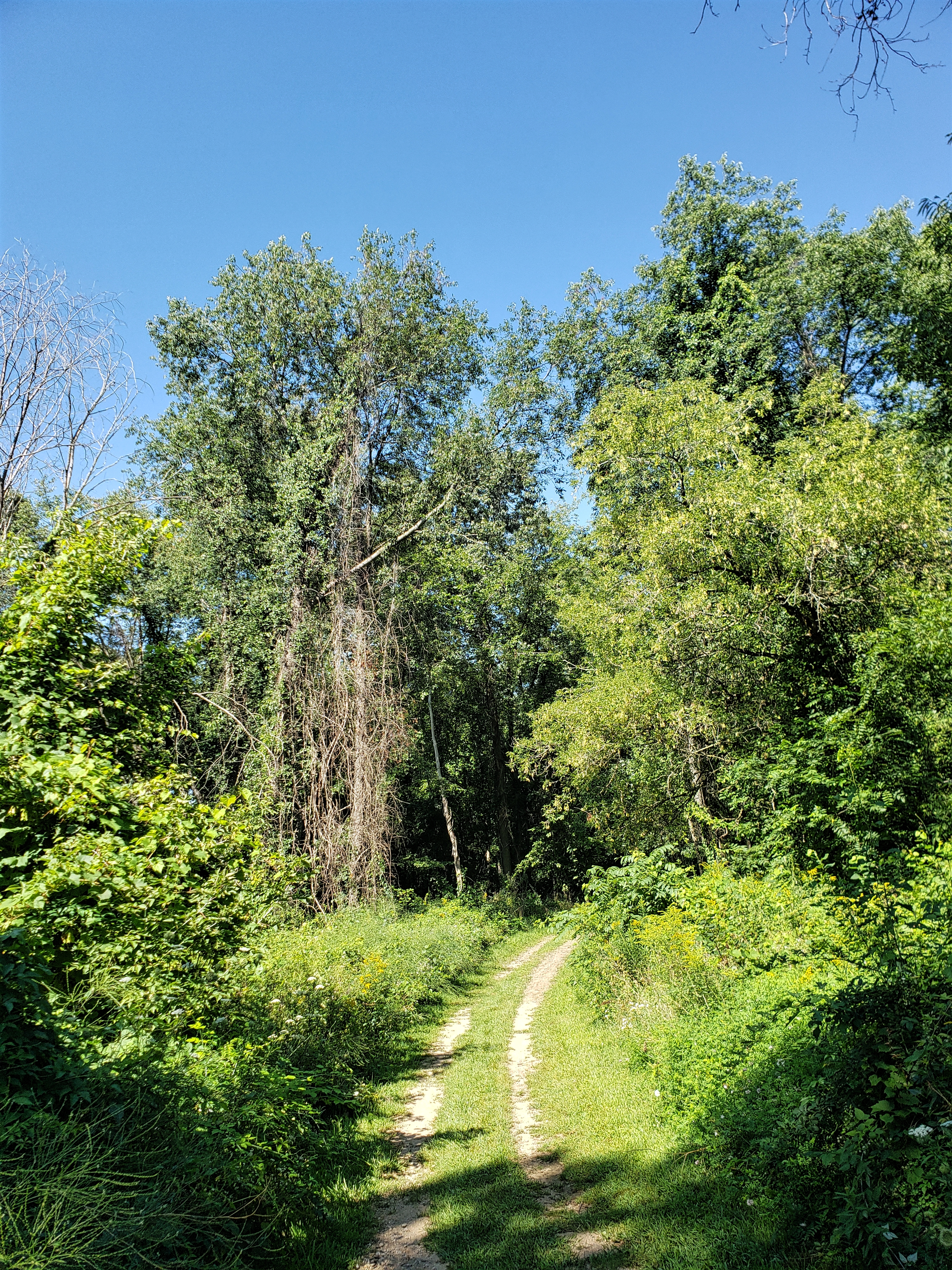 Another trolley trail landscape. this path leads into the woods.