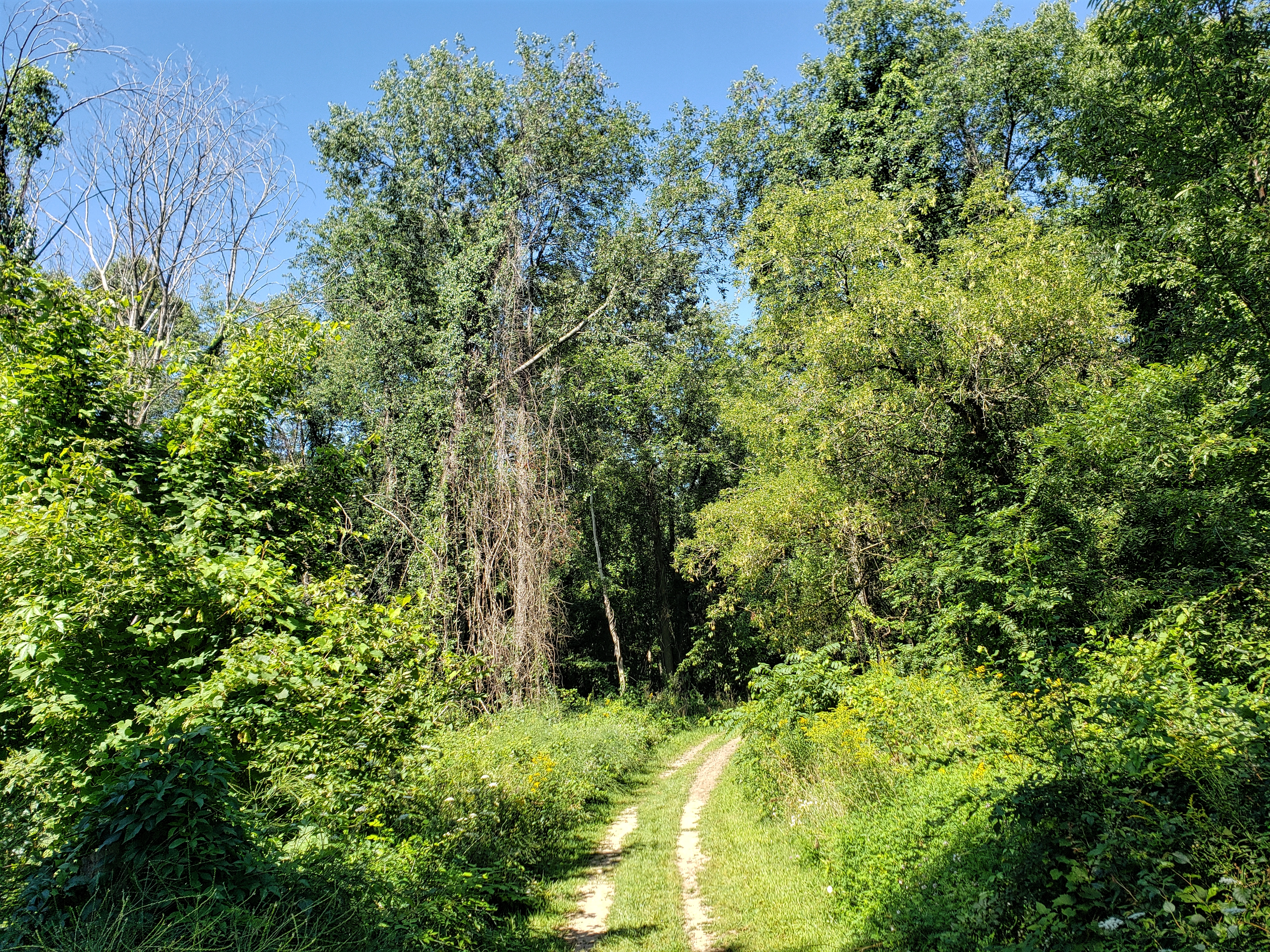 landscape along the trolley trail. the hiking trail is surrounded by trees.