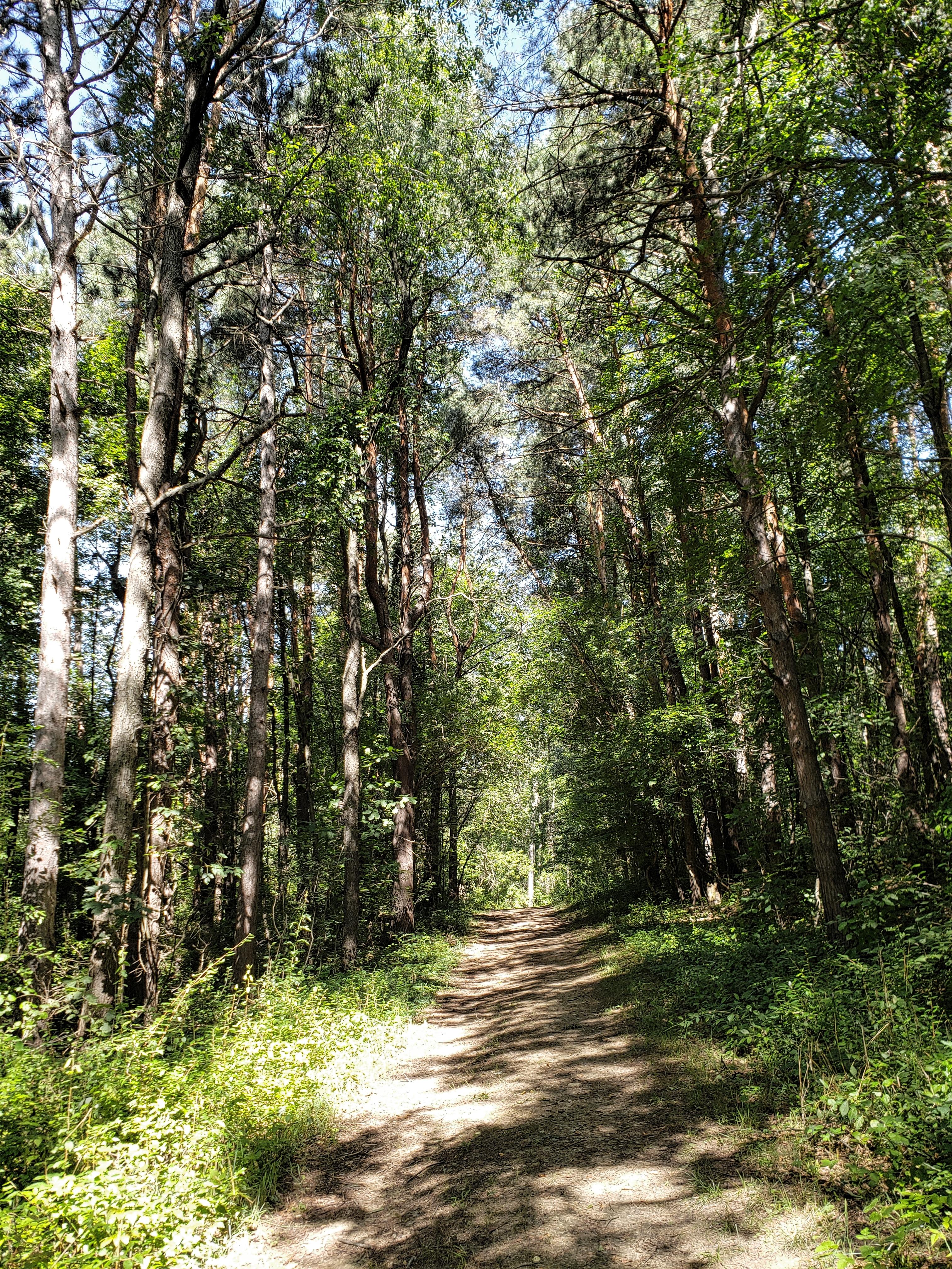 trolley trail mountain bike and hiking trail.