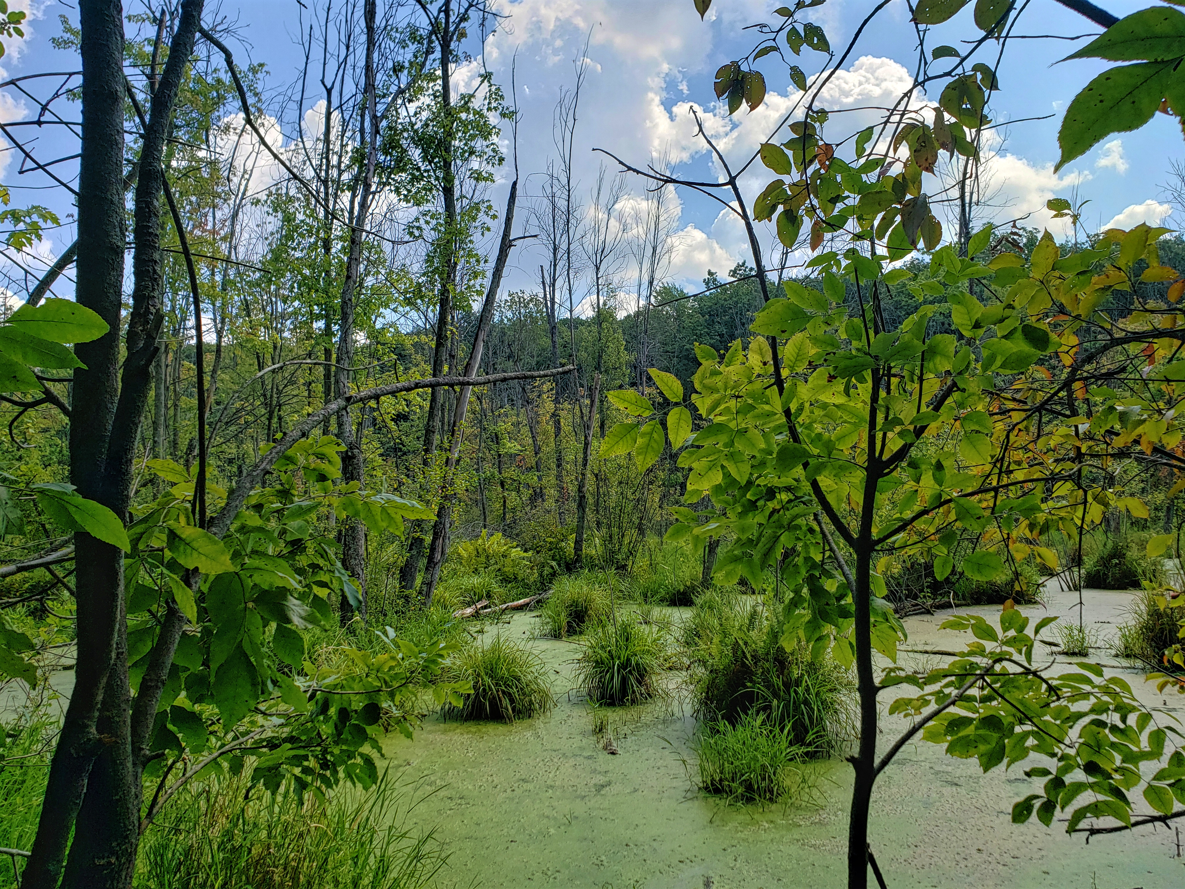swampy marshland at the West Bloom Field Nature Trail