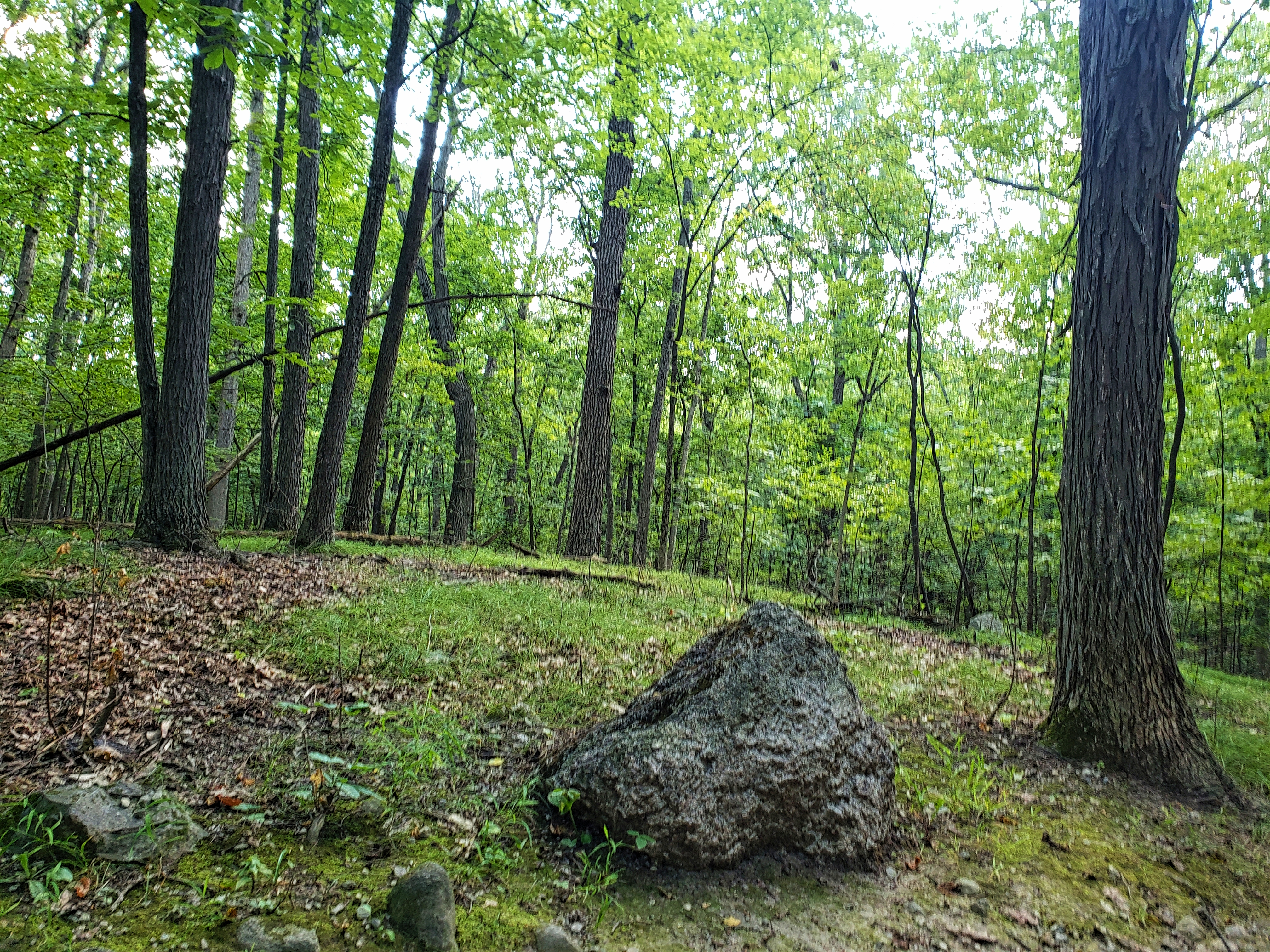 A rock in the foreground of the woods at the West Bloomfield Nature Preserve