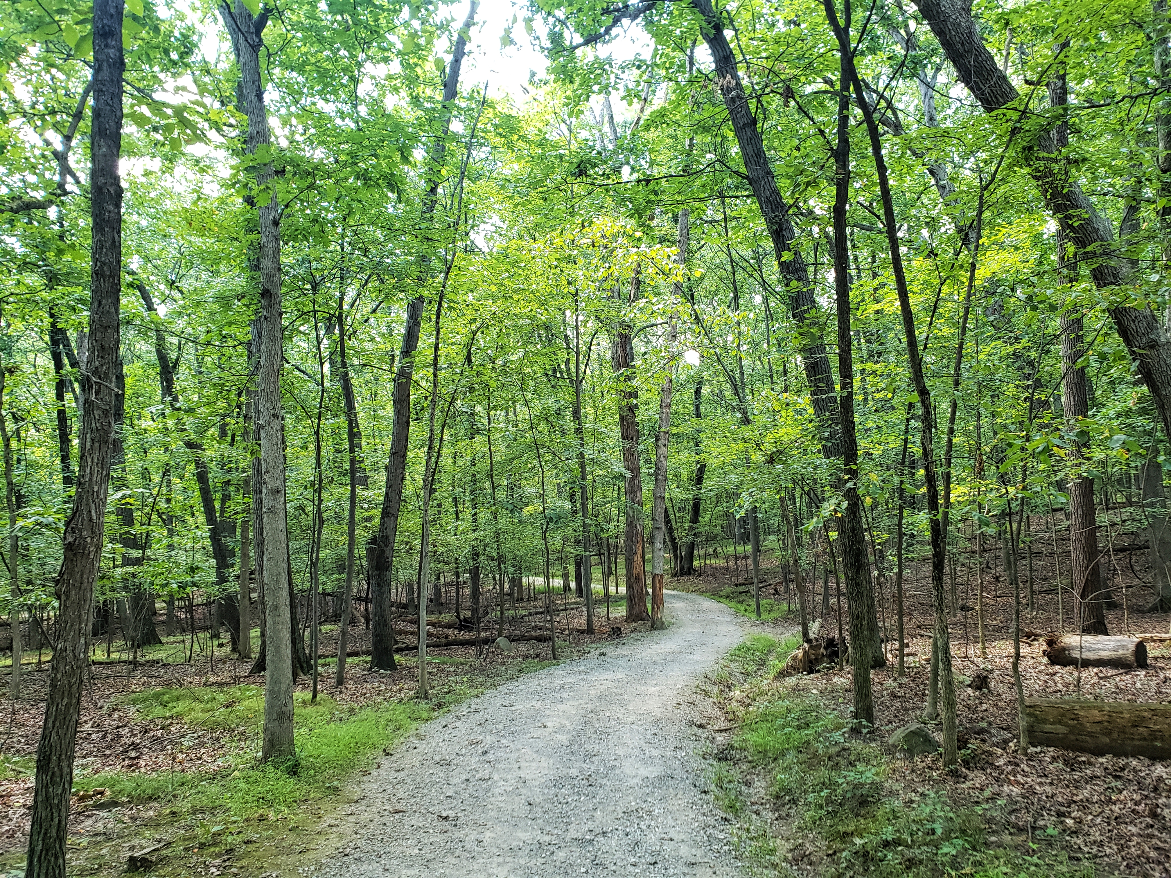 The trail leads further into woods at the West Bloom Field Nature Preserve Trail
