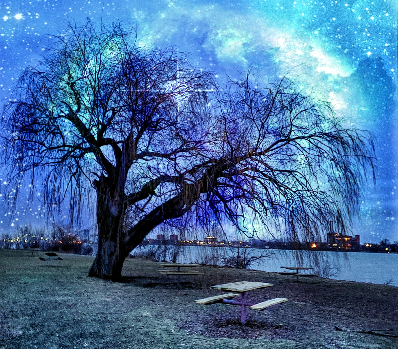 a willow tree surrounded by picnic tables on belle isle, the sky is a bright blue and filled with stars
