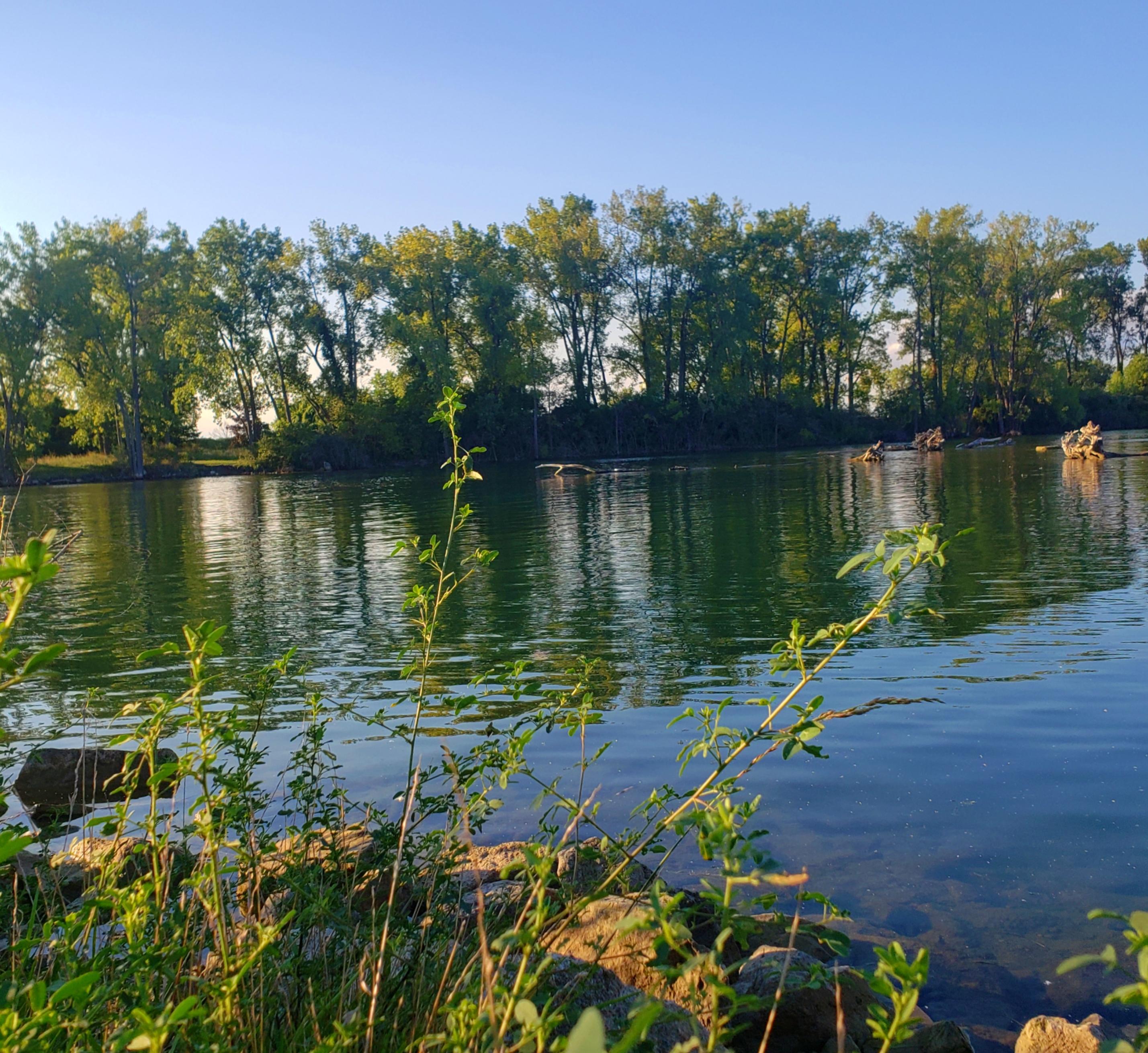 The Blue Heron Lagoon on Belle Isle State Park