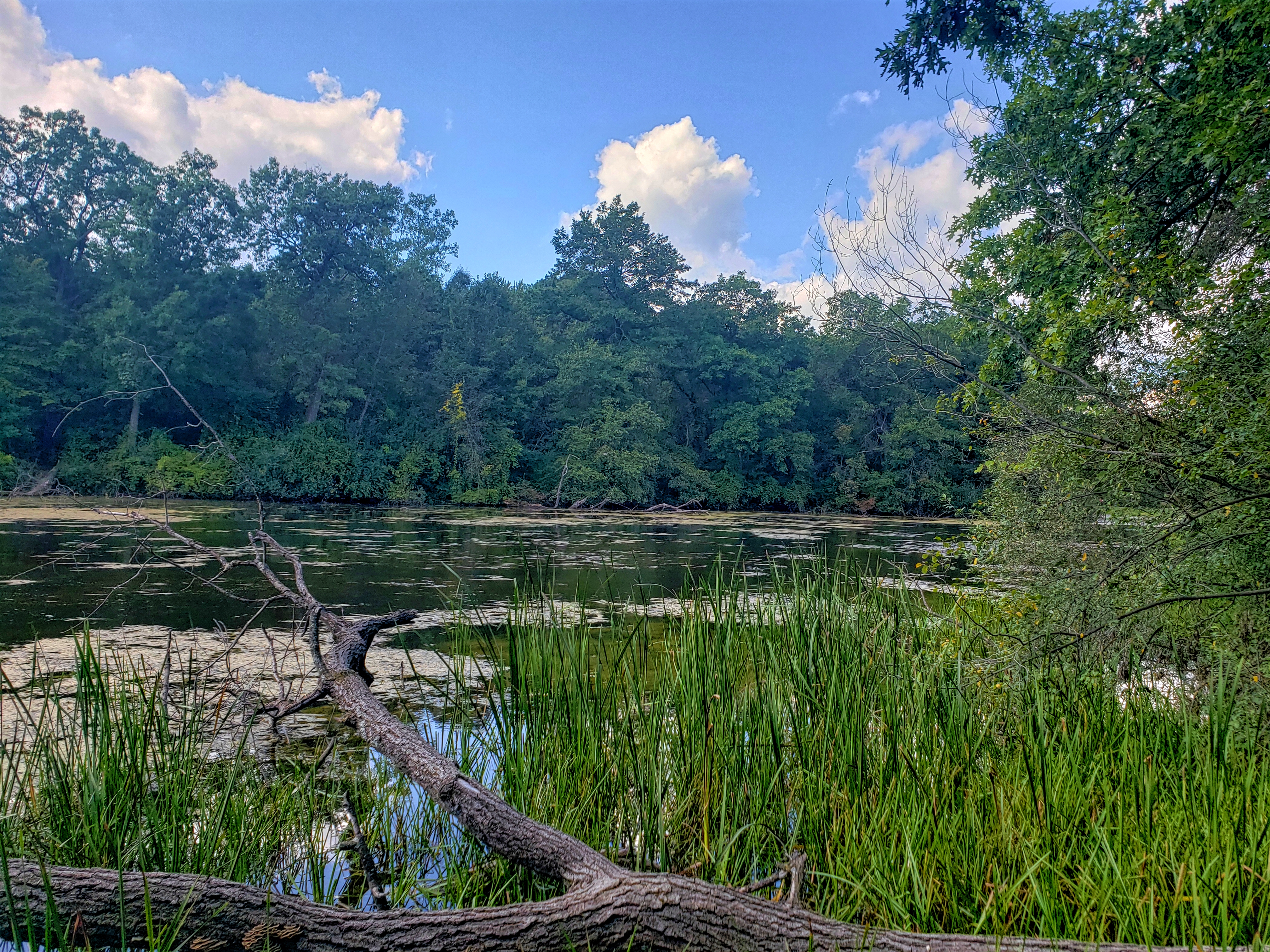 Limbs of a fallen tree rest atop of the waters of Upper Trout Lake at Bald Mountain recreation Area in Lake Orion Michigan.