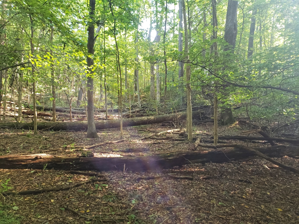 a wooded area at Bear Creek Nature Park