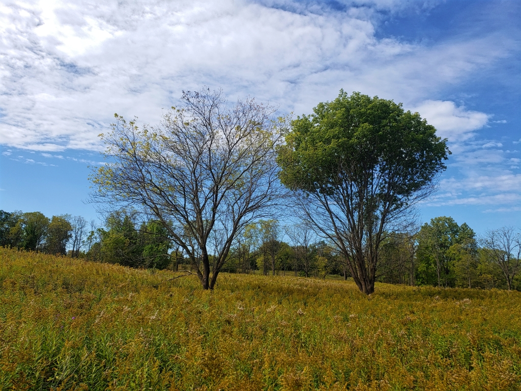 a couple of trees dot the landscape of this open field at Bear Creek Nature Park in Oakland Township