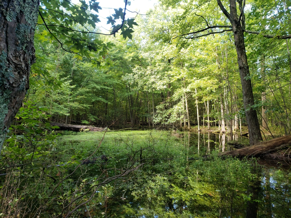 A Pond in a wooded area at Bear Creek Nature Park.