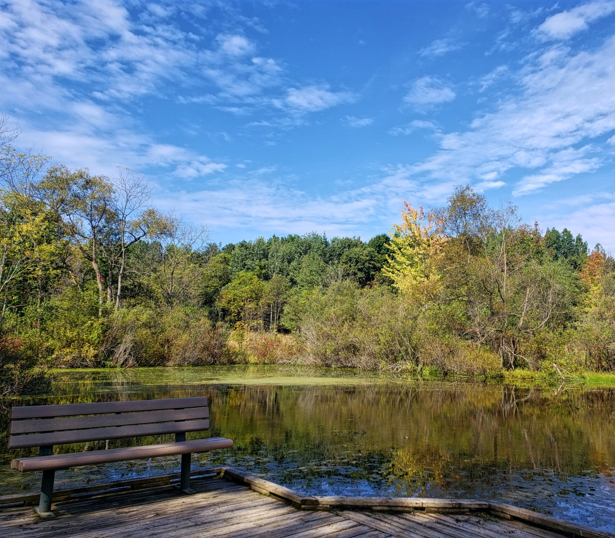 Enjoy the view of the Bear Creek Marsh from the boardwalk.