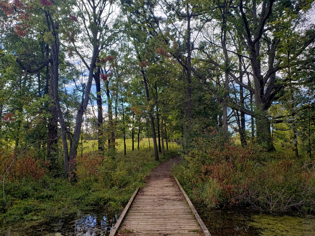 the boardwalk that leads from the trail to the bear creek marsh