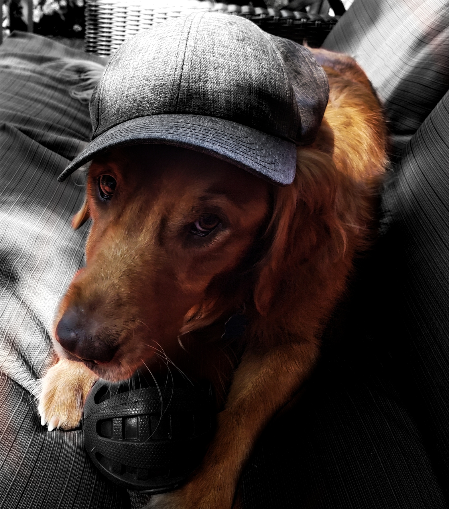 a cute golden retriever wearing a cap. He has a ball in between his two paws.